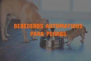 bebederos automaticos para perros