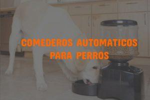 comederos automaticos para perros