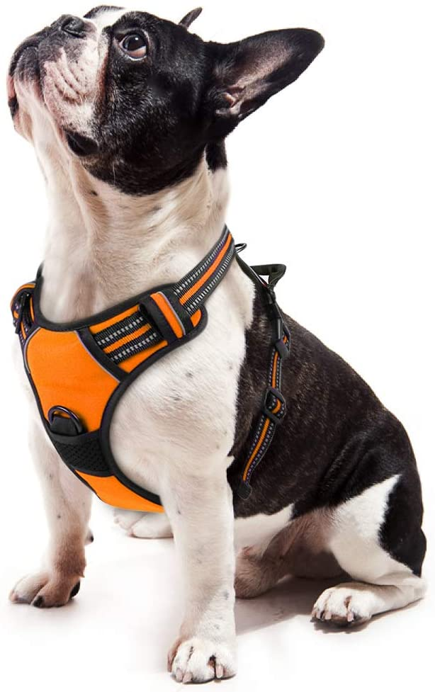 arnés para perros original color naranja de la marca rabbitgoo