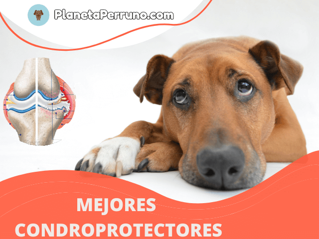 mejores suplementos alimenticios para las articulaciones de perros