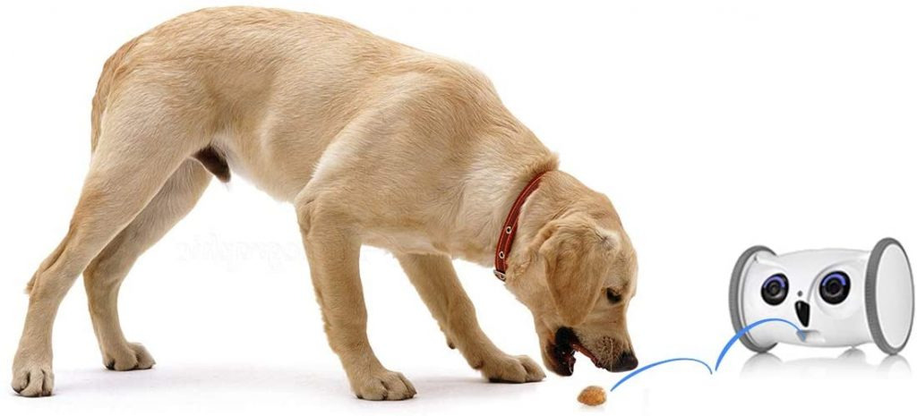 cámara para perros que sirve como juguete interactivo