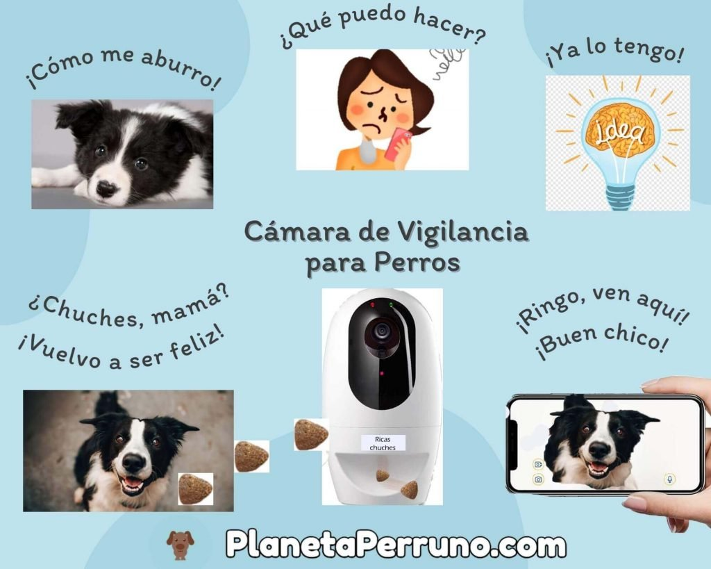 para qué sirve una cámara de vigilancia para perros?
