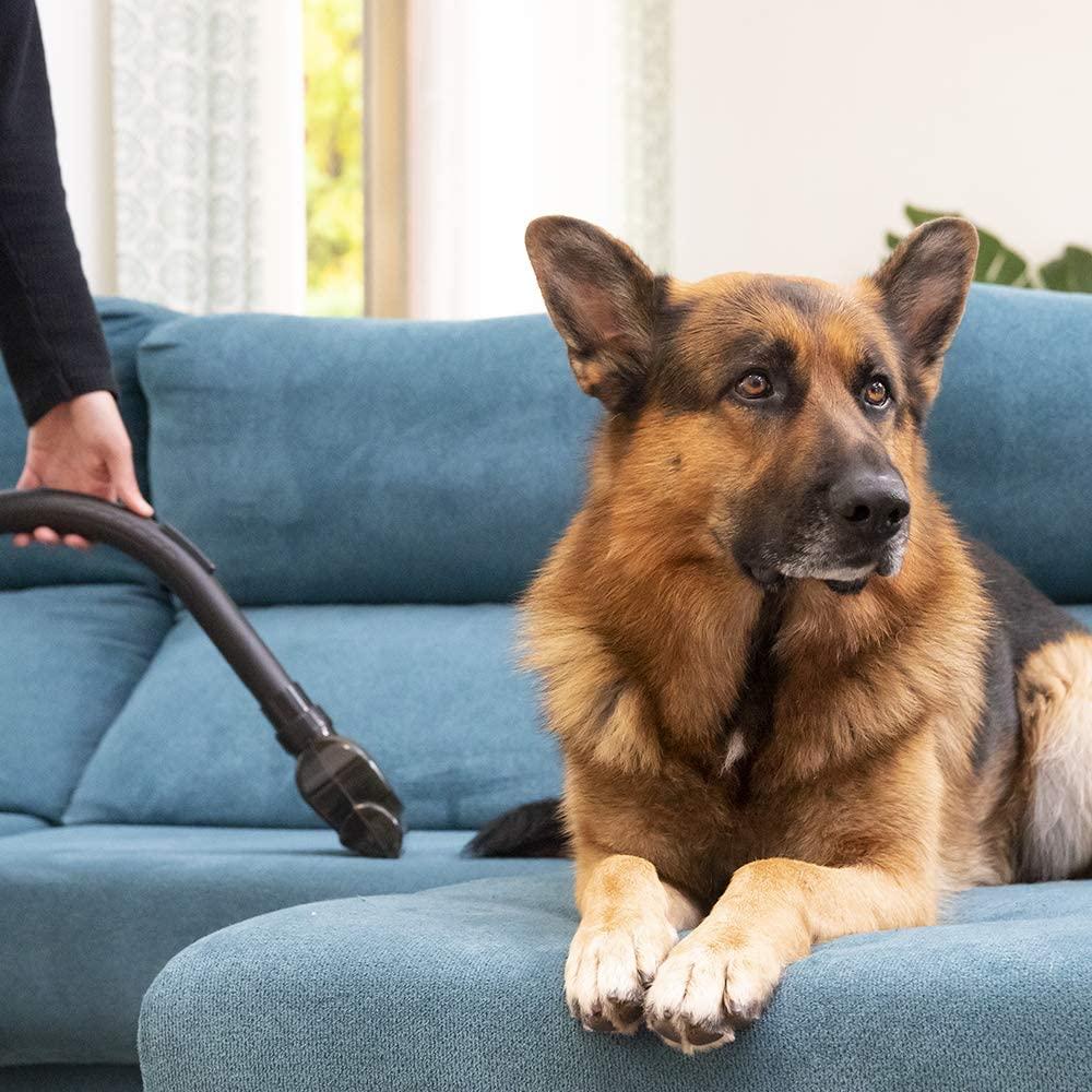 conga la aspiradora de trineo para pelos de perro de cecotec