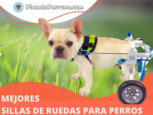 descubre cómo escoger la mejor silla de ruedas para tu perro en planetaperruno.com
